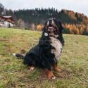 Lokalizator GPS dla psa TKStar